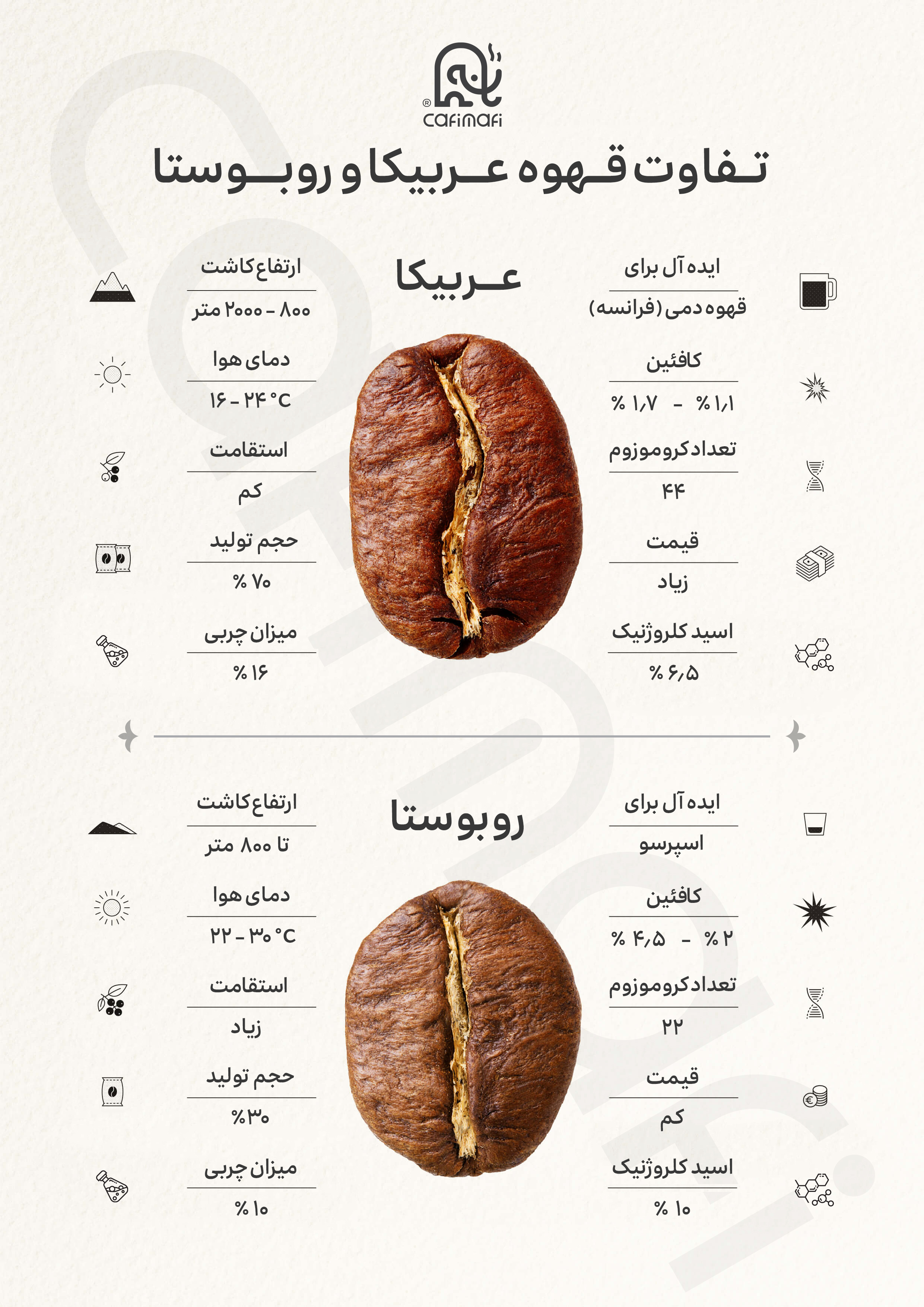 انواع قهوه - عربیکا و روبوستا